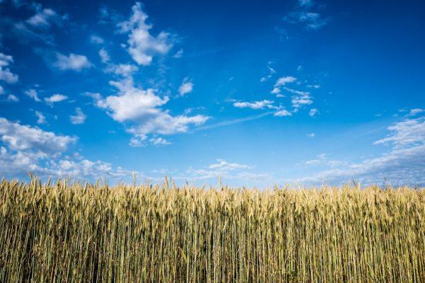 Agricultura Precizie